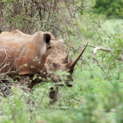 3 night 4 day south africa safari package