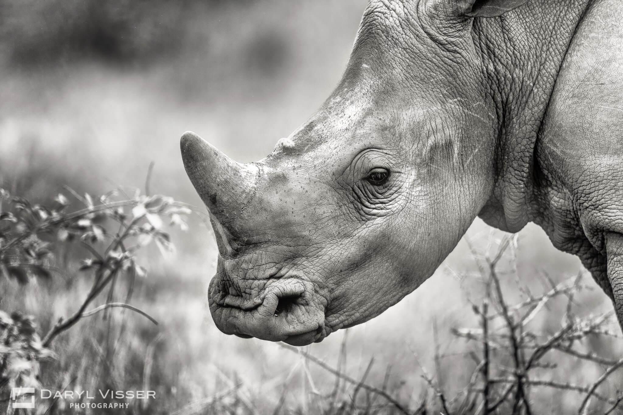 isimangaliso rhino