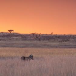 3 night hluhluwe umfolozi safari package
