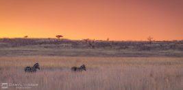 2 Night Hlunluwe-Park Safari Package