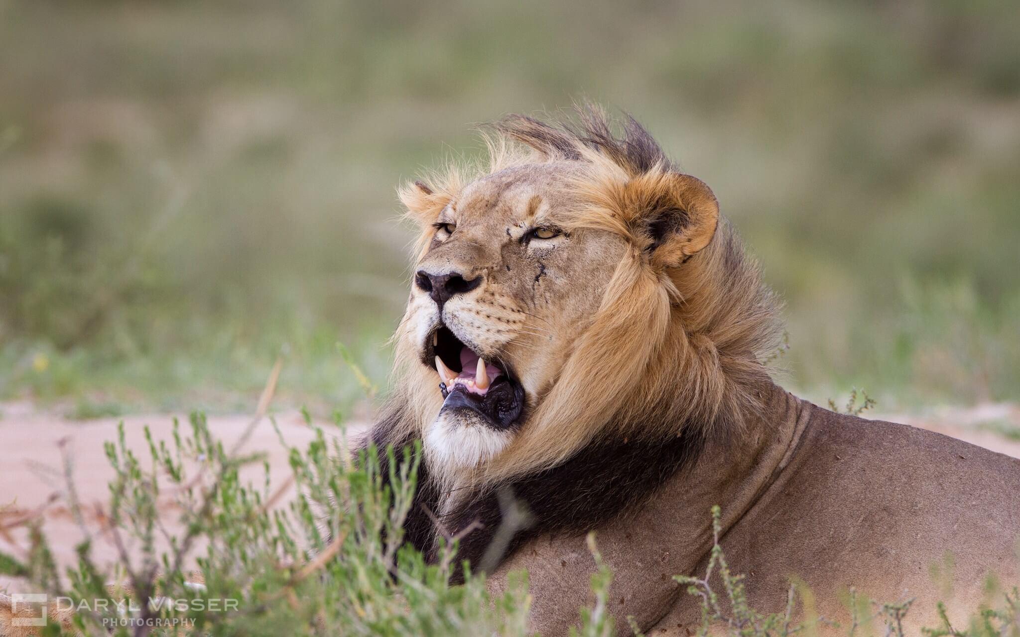 3 day durban safari tour