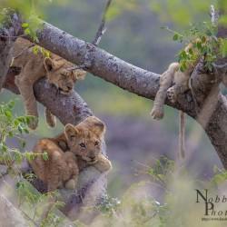 4 nigts hluhluwe safari