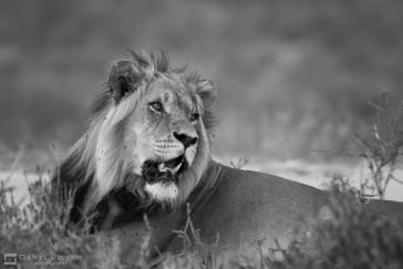 Durban Big 5 Safari to Hluhluwe