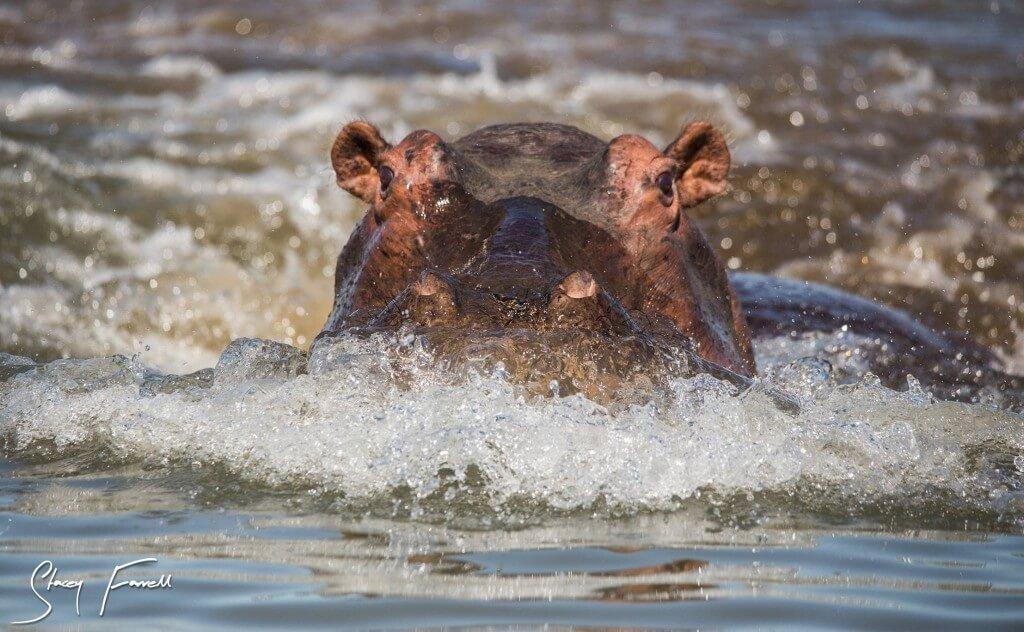 umfolozi hluhluwe game reserve