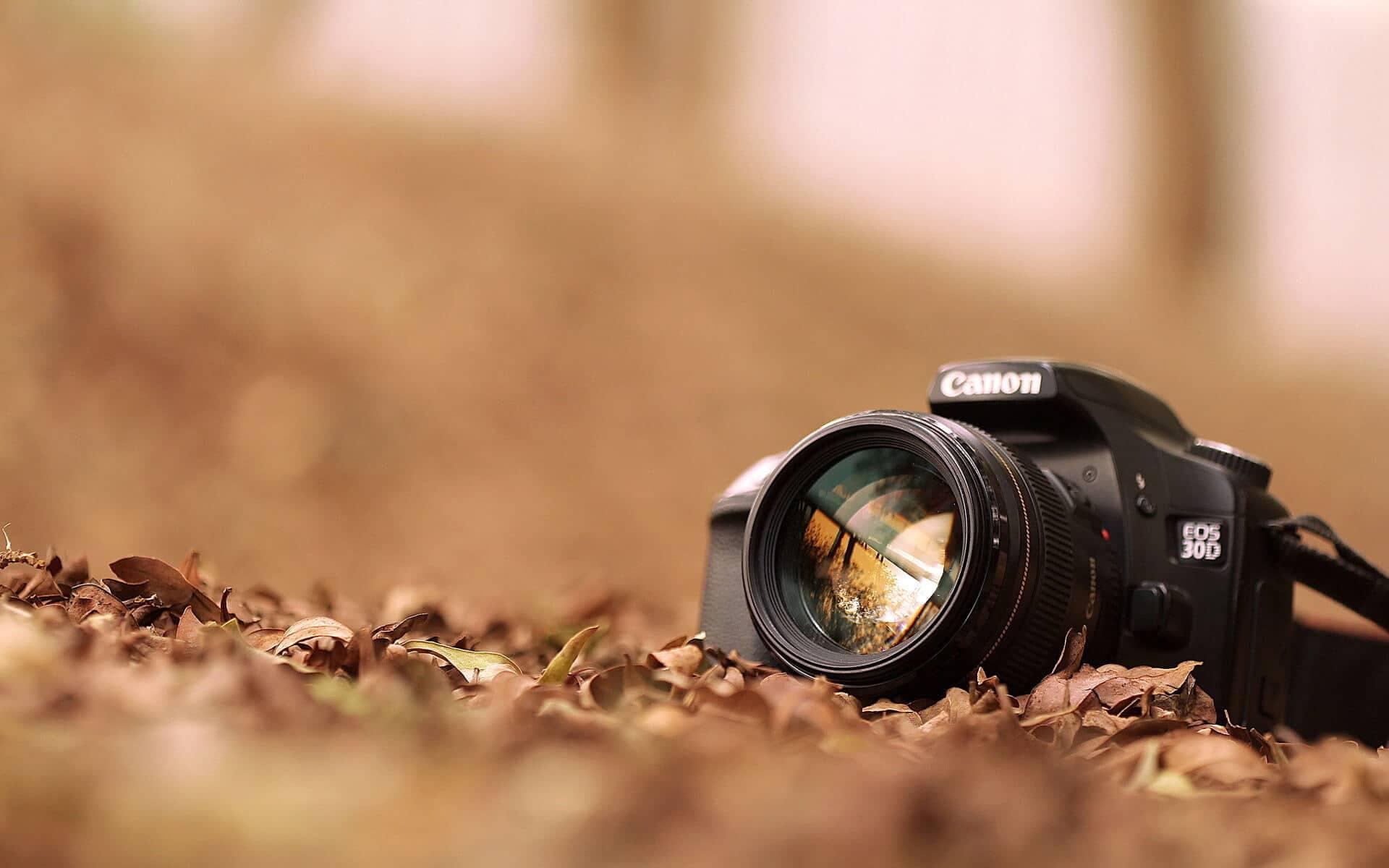 safari self drive photographic tips
