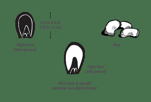 zebra hoofs