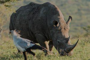 durban safari options