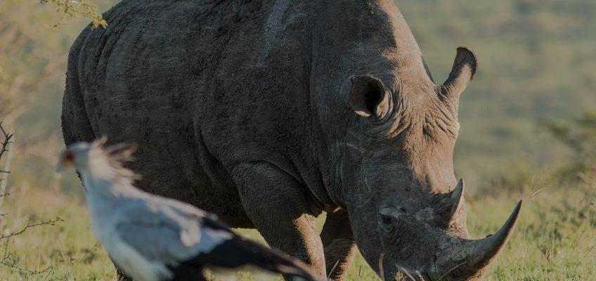 Durban Safari Getaway