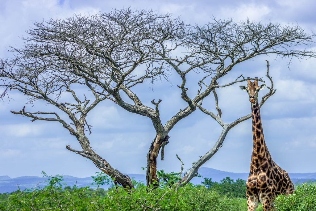 south africa kwazulu natal tours and safari packages