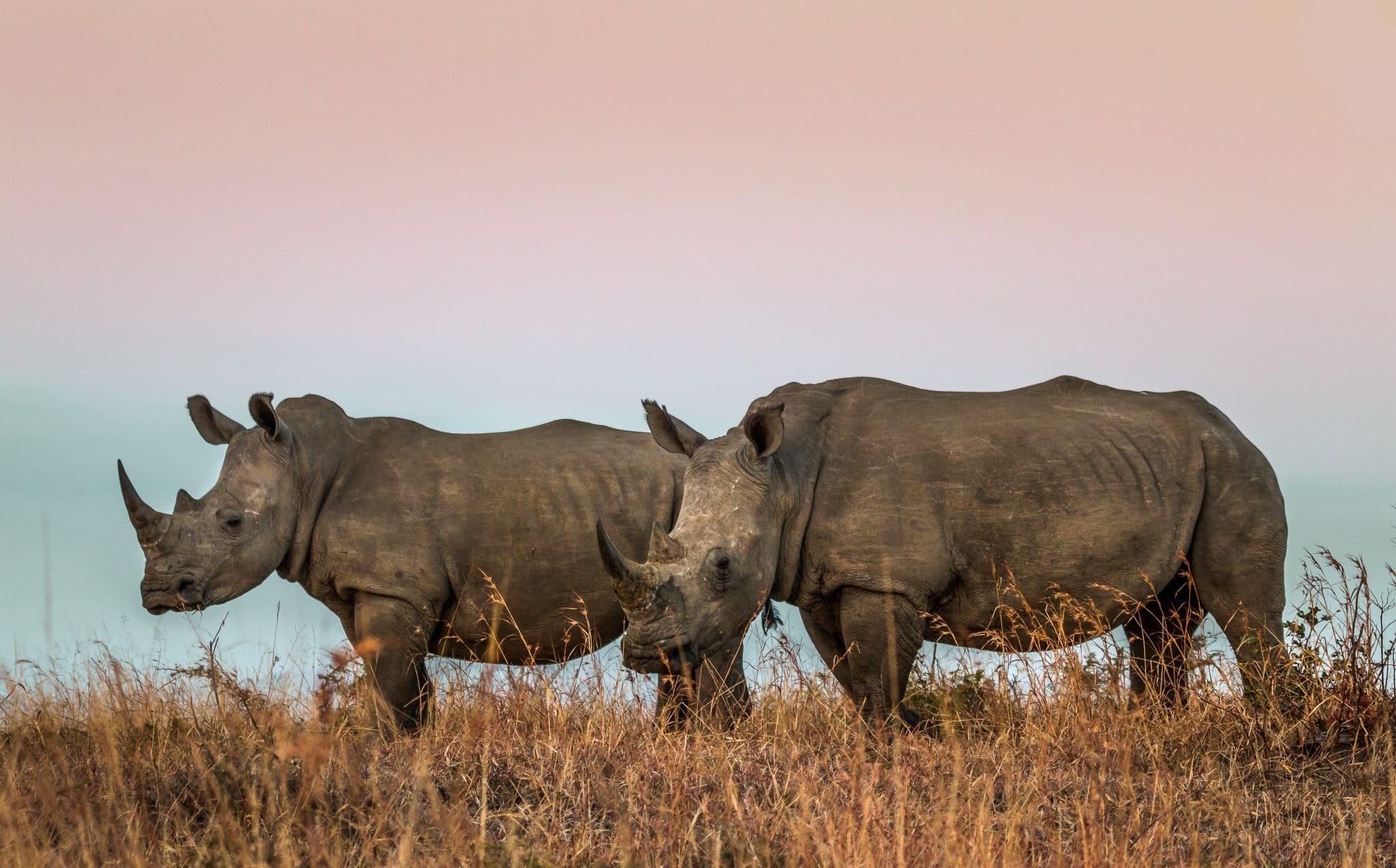 day safari options to hluhluwe-imfolozi park