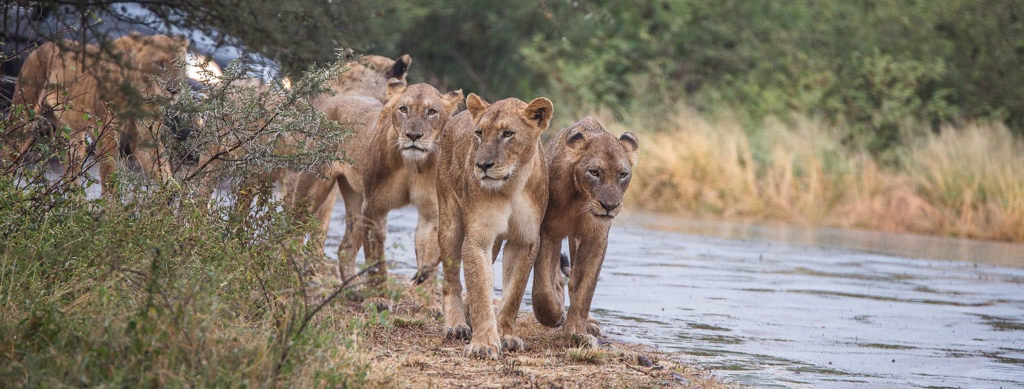 full day big 5 safari hluhluwe-imfolozi park
