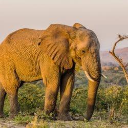full day big 5 safari wildlife sightings