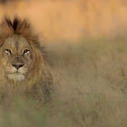 full day hluhluwe umfolozi safari