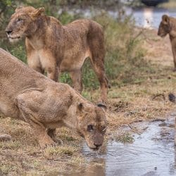 safari packages south africa
