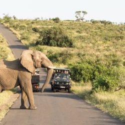 umfolozi imfolozi big 5 safari
