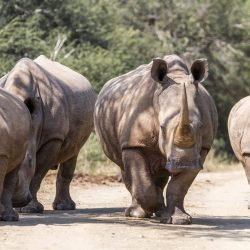 umfolozi big 5 safari