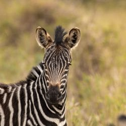 Heathrow to Durban flights and Safari Packages