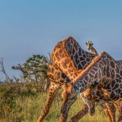 6 day bush & battlefield safari