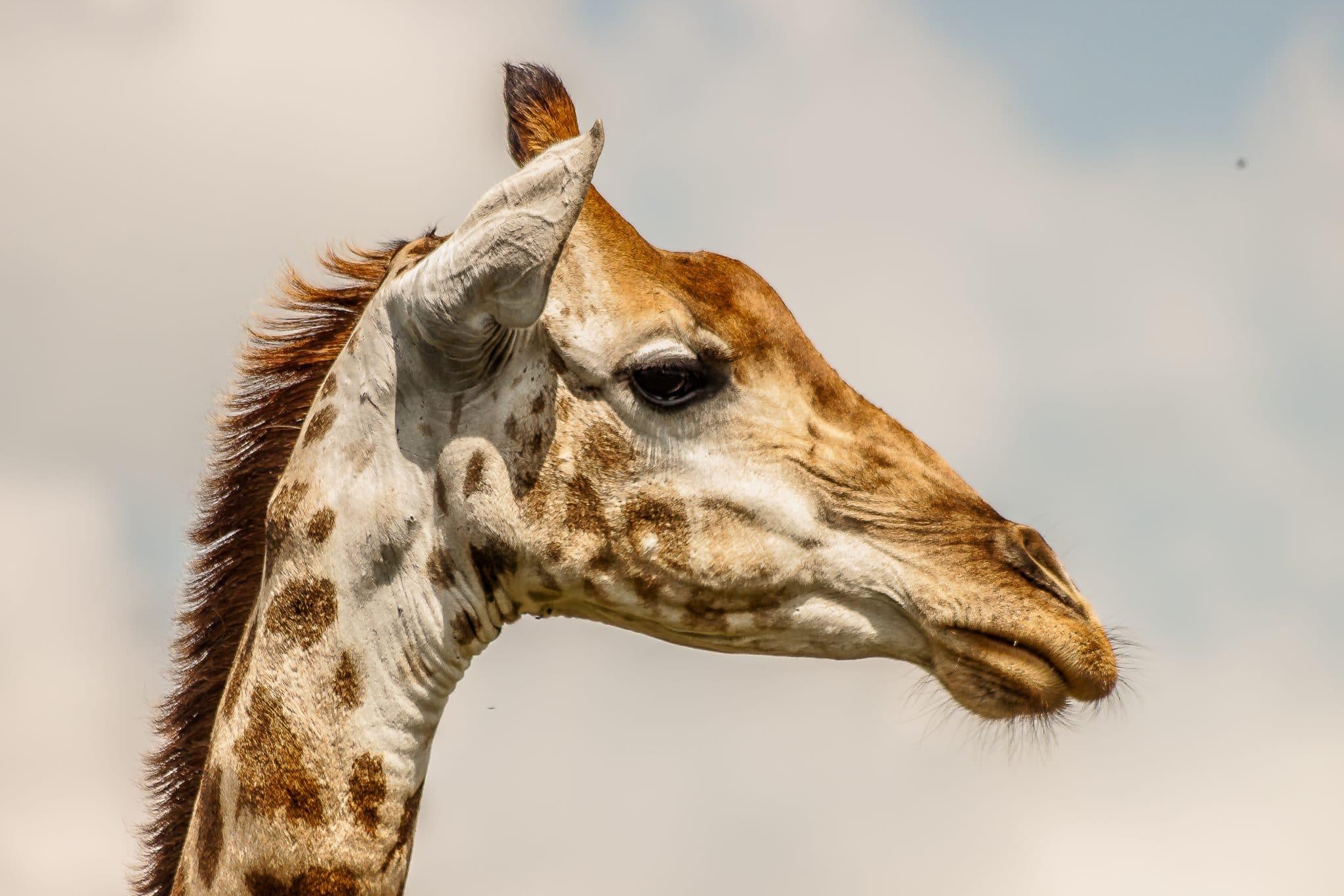 Hluhluwe-Imfolozi Park Animals