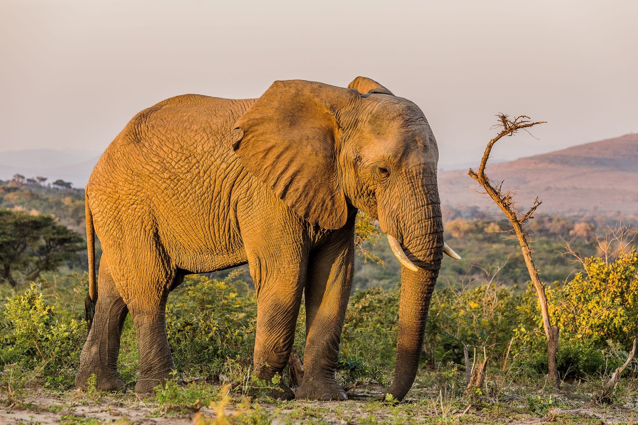 hluhluwe-imfolozi park animal elephant