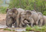 Hluhluwe-Imfolozi Park KwaZulu Natal South Africa