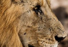 kwazulu natal durban best safari