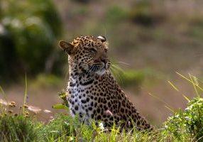 isimangaliso wetland park safari