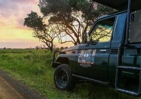 South Africa Safari Package Tips